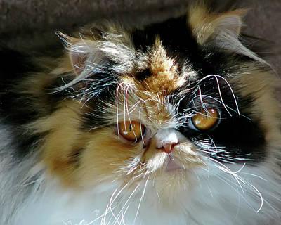 Photograph - Cali Cat by Rhonda McDougall