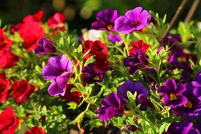 Photograph - Calibrachoa Hanging Basket by Kathryn Meyer