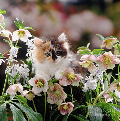 Photograph - Calico Calm by Warren Photographic