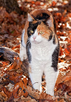 Photograph - Calico Camo by Sari ONeal