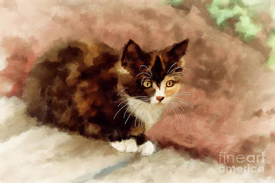 Digital Art - Calico Kitten by Lois Bryan