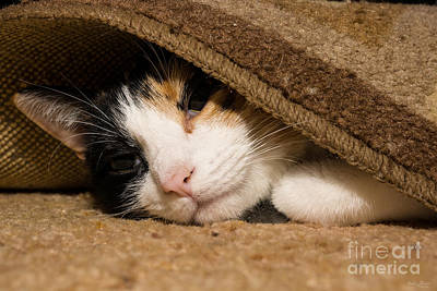 Photograph - Calico Under The Rug by Jennifer White
