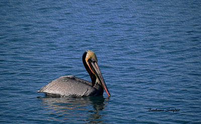 Painting - California Brown Pelican Oil by Barbara Snyder