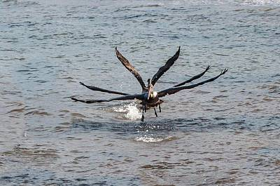 Photograph - California Brown Pelicans Flying In Tandem by NaturesPix