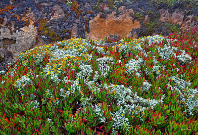 California Coast Wildflowers Art Print by George Bostian