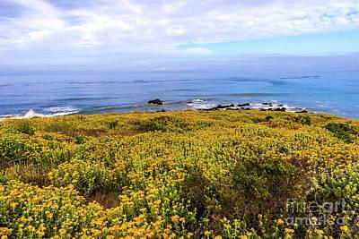 Photograph - California Coast -  Yellow Flowers Blue Ocean by Dan Carmichael