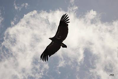 Condor Wall Art - Photograph - California Condor In Flight by David Gordon
