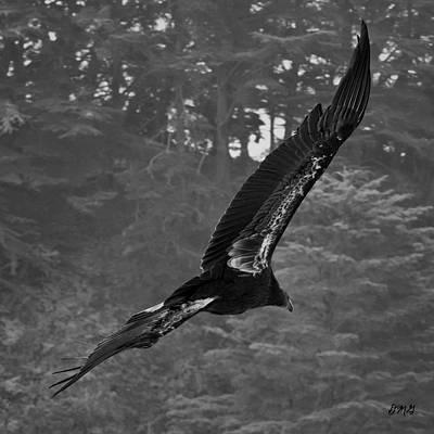 Condor Wall Art - Photograph - California Condor In Flight II Bw by David Gordon