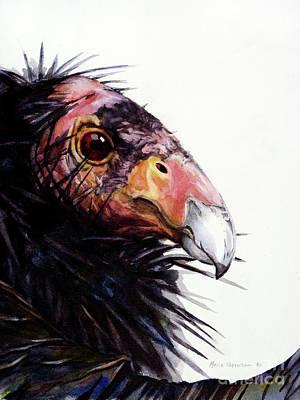 California Condor Original