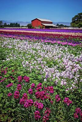 Photograph - California Country Flower Field by Lynn Bauer