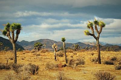 Digital Art - California Desert 2 by Max DeBeeson