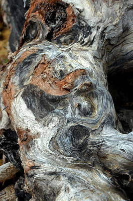 Photograph - California Driftwood Yeti by Carla Parris