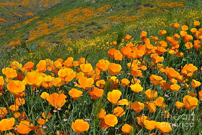 Photograph - California Golden Poppies And Goldfields by Glenn McCarthy