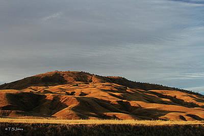 Digital Art - California Grassland by Tom Janca