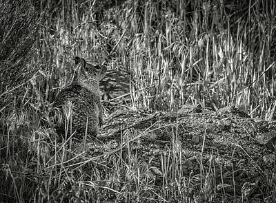 Photograph - California Ground Squirrel Bw by Rick Mosher