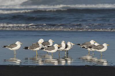 Photograph - California Gulls On The Beach by Robert Potts