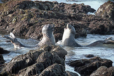 Photograph - California Happy Seals by Donna Kennedy
