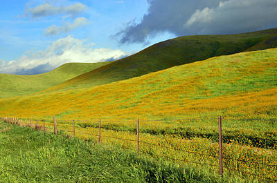 Fiddleneck Photograph - California Hills In Spring by Kathy Yates