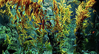 Photograph - California Kelp Forest by Russ Harris