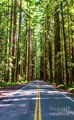 Photograph - California Majestic Tall Redwood Trees by Dan Carmichael