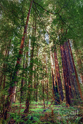 Digital Art - California Mountains -  Crowded Redwoods Ap by Dan Carmichael
