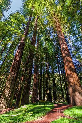 Photograph - California Mountains -  Trail Thru Redwood Shadows by Dan Carmichael