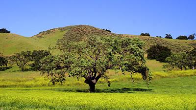 Photograph - California Oak by Gary Brandes