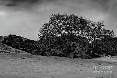 Photograph - California Oak Near Salinas by Jeffrey Hubbard
