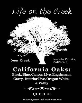 Digital Art - California Oak Trees - White Text by Lisa Redfern