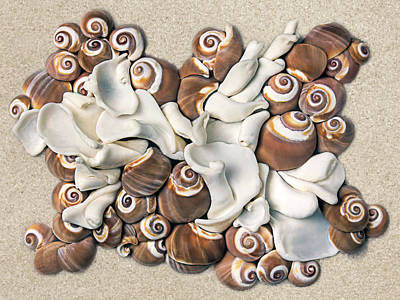 Seashell Photograph - California Opus 21 by Carol Zee