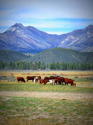 Photograph - California Pastures by Glenn McCarthy Art and Photography