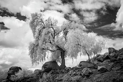 Photograph - California Pepper Tree by G Wigler