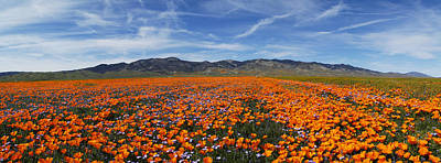 Photograph - California Poppies by Gary Cloud