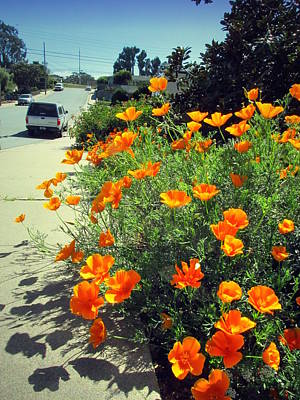 Photograph - California Poppies by Joyce Dickens