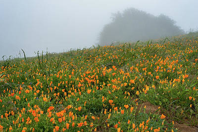 California Poppies On Volcan Mountain Art Print