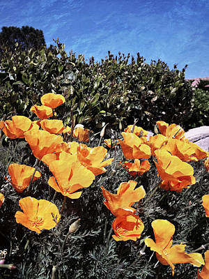 Photograph - California Poppies - Reaching For Rays by Glenn McCarthy Art and Photography