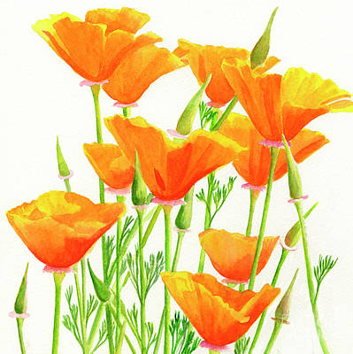 California Wall Art - Painting - California Poppies Square Design by Sharon Freeman