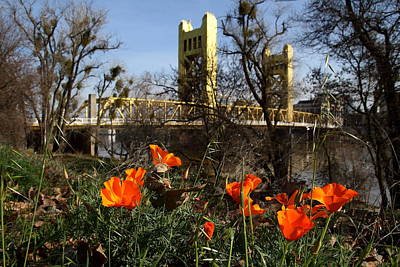 Old Sacramento Photograph - California Poppies With The Slightly Photographically Blurred Sacramento Tower Bridge In The Back by Wingsdomain Art and Photography