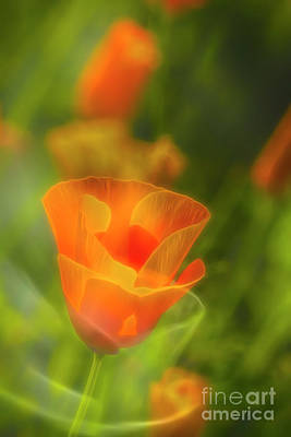 Abstract Flowers Royalty-Free and Rights-Managed Images - California Poppy 2 by Veikko Suikkanen