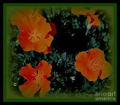 Photograph - California Poppy by Diane montana Jansson