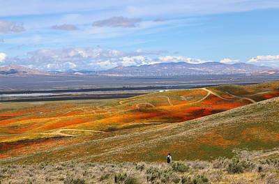 Photograph - California Poppy Reserve by Viktor Savchenko
