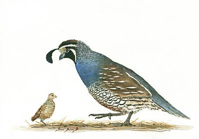 Chicks Painting - California Quail by Juan Bosco