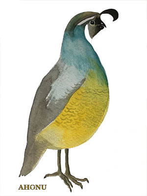 Painting - California Quail Posing by Ahonu