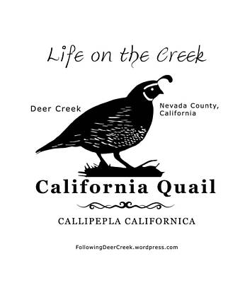Digital Art - California Quail - White by Lisa Redfern