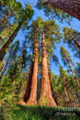 Sequoia Painting - California Redwood And Sequoia Trees Ap by Dan Carmichael