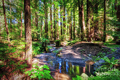 Photograph - California Redwood Forest Wetlands by Dan Carmichael