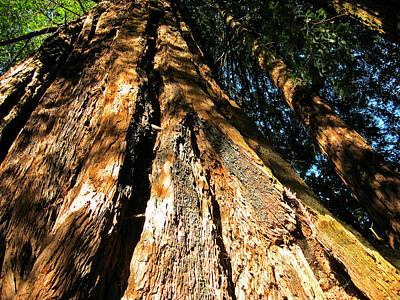 Digital Art - California Redwood by Max DeBeeson