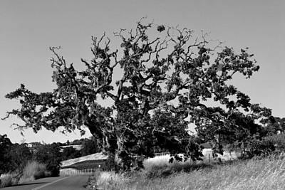 California Roadside Tree - Black And White Art Print