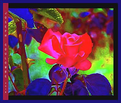 Digital Art - California Rose by Joseph Coulombe