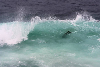 Photograph - California Sea Lion Catches A Wave by Robin Street-Morris
